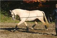 Busse Cotton Lunging Aid