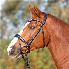 Kieffer Ultrasoft Amy Bridle