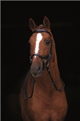 Micklem New Style Micklem Competition Bridle