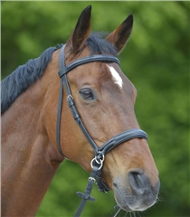 Unbranded Star Bitless Bridle