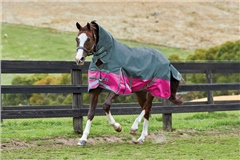 Weatherbeeta Comfitec Plus Dynamic Combo Neck Turnout Lite
