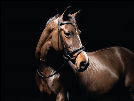 Caldene Padded Flash Snaffle Bridle  - Click to view a larger image