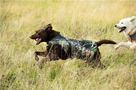 Horseware Rambo Camouflage Dog Blanket  - Click to view a larger image