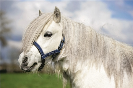 Horseware Petite Amigo Headcollar  - Click to view a larger image