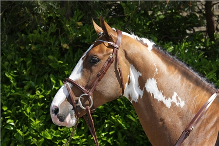 John Whitaker Flash Bridle  - Click to view a larger image