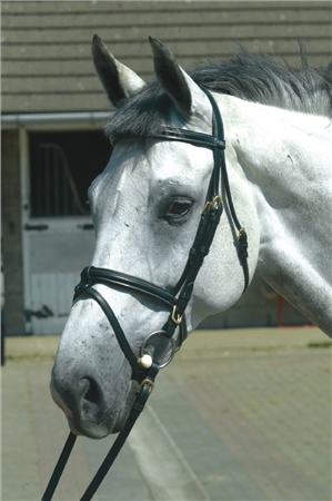 John Whitaker JW3 Super Deluxe Flash Bridle  - Click to view a larger image