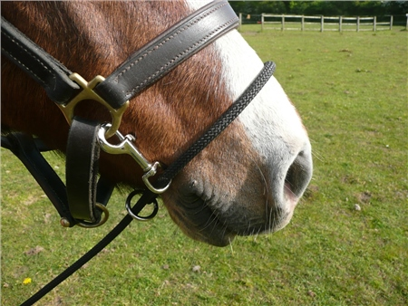 Kemp Controller Headcollar Attachment  - Click to view a larger image