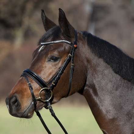 Kieffer Comfort Paris Snaffle Bridle  - Click to view a larger image