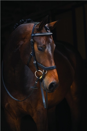 Micklem Rambo Micklem Diamante Competion Bridle  - Click to view a larger image