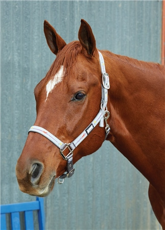 Roma Reflective Ribbon Headcollar  - Click to view a larger image